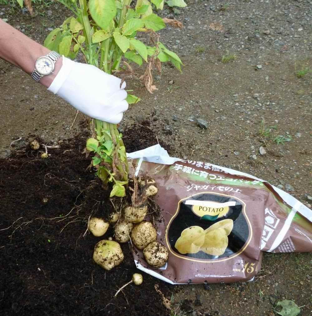 種イモを植えるだけで手軽に育つ「ジャガイモの土」15L