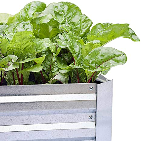 Buy Galvanized Raised Garden Beds For Vegetables Large Metal Planter Box Steel Kit Flower Herb 8x4x1ft Online At Low Prices In India Amazon In