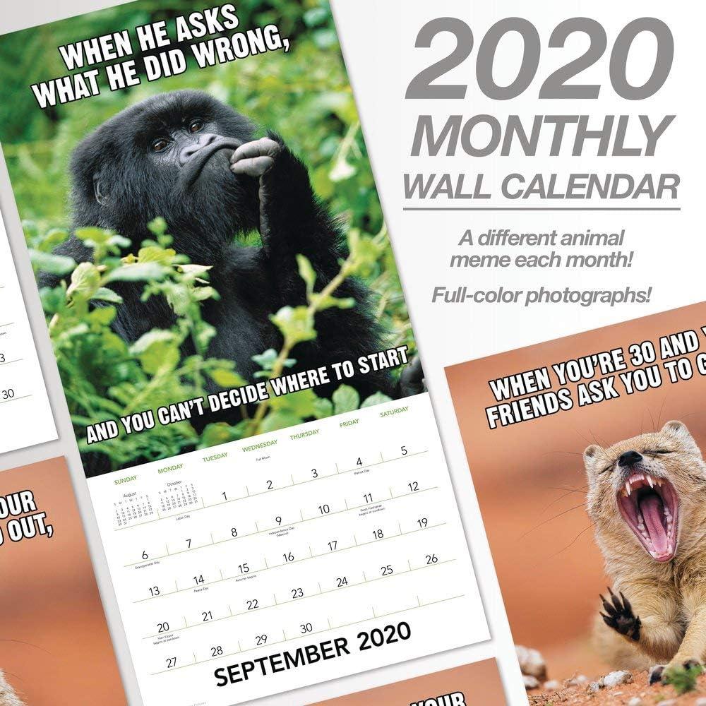 2020 Animal Memes Wall Calendar LME3101020