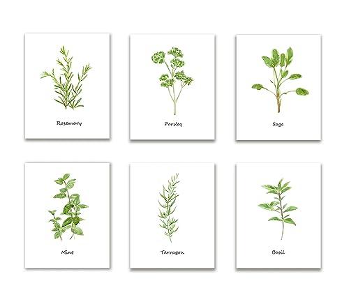 Amazon Com Herbs Kitchen Wall Art Set Of 6 Culinary Herbs Botanical Art Prints Kitchen Decor Dining Room Decor Unframed Prints Handmade