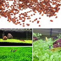 Aquarium Plant Seeds Fast Growing, Easy to Grow, Fish Tank Decoration Live Plant