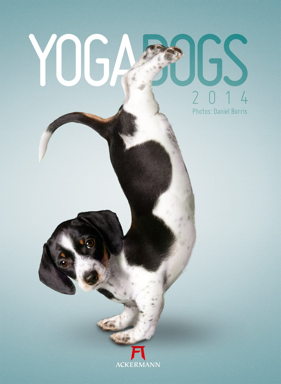 Yoga Dogs 2014