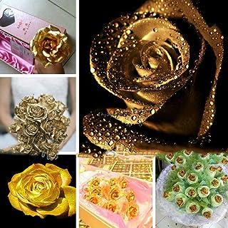 AGROBITS 30P: Semi di Fiore della Rosa in Vaso Bonsai Rare en Semi Fiore della Rosa casa Oo55 01
