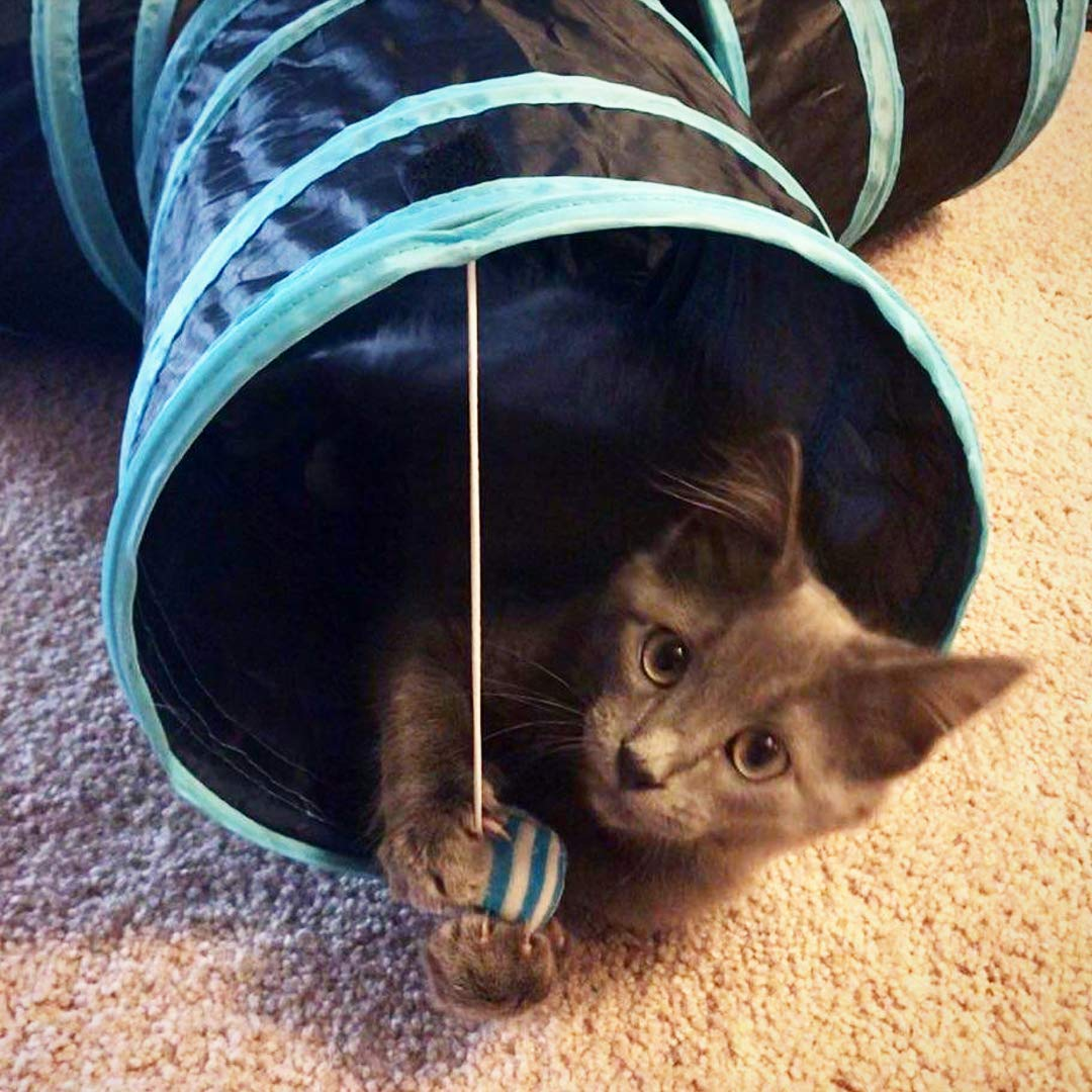 Cat Tunnel 3 Way and Assorted Cat Toys for Adult Cats and Kittens, Mice, Jingle Bells, Feather Toys, Crinkle Balls