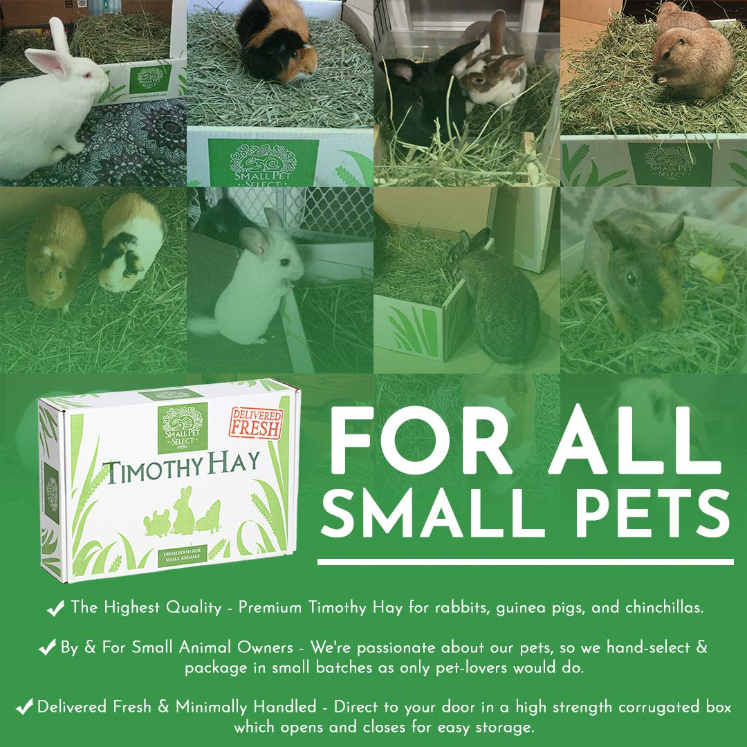 Small Pet Select 2nd Cutting Timothy Hay Pet Food, 10-Pound by Small Pet Select