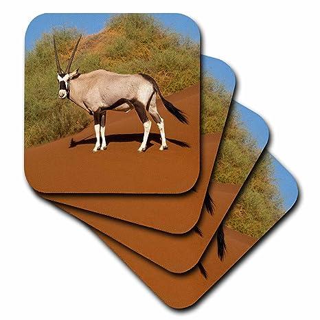 Amazon com | 3dRose Danita Delimont - Animals - Namibia