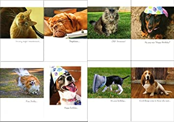 CUTE FUNNY ANIMAL 100 BIRTHDAY CARDS BEST BULK BUY VALUE DOG AND CAT GREETING