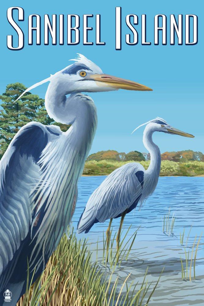青サギ – サニベル島、フロリダ州 36 x 54 Giclee Print LANT-47734-36x54 36 x 54 Giclee Print  B017E9RRGO