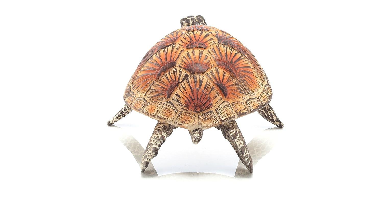 Warning turtles amp tortoises inc - Warning Turtles Amp Tortoises Inc 22