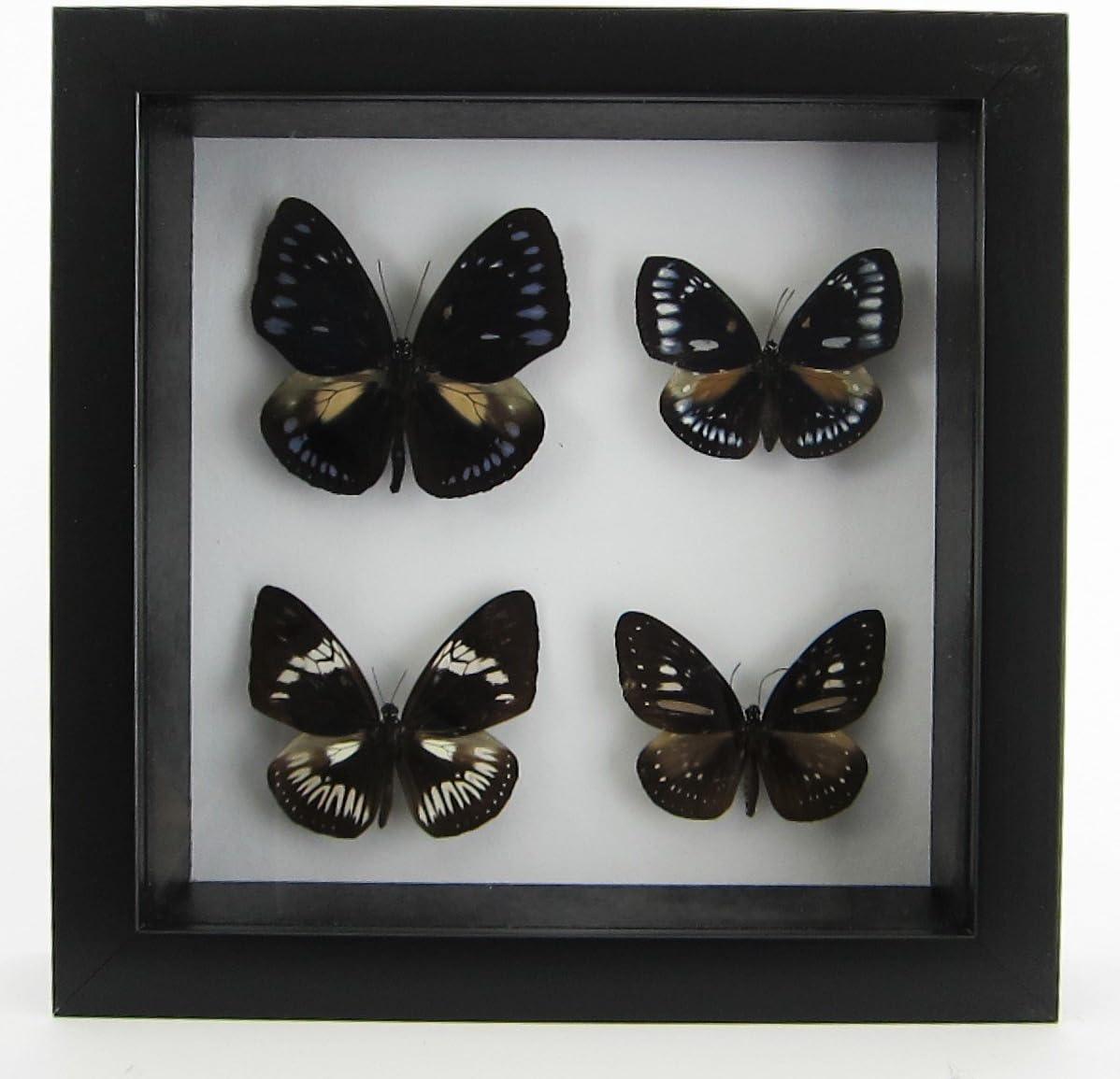 3\u201d Butterflies /& Insects