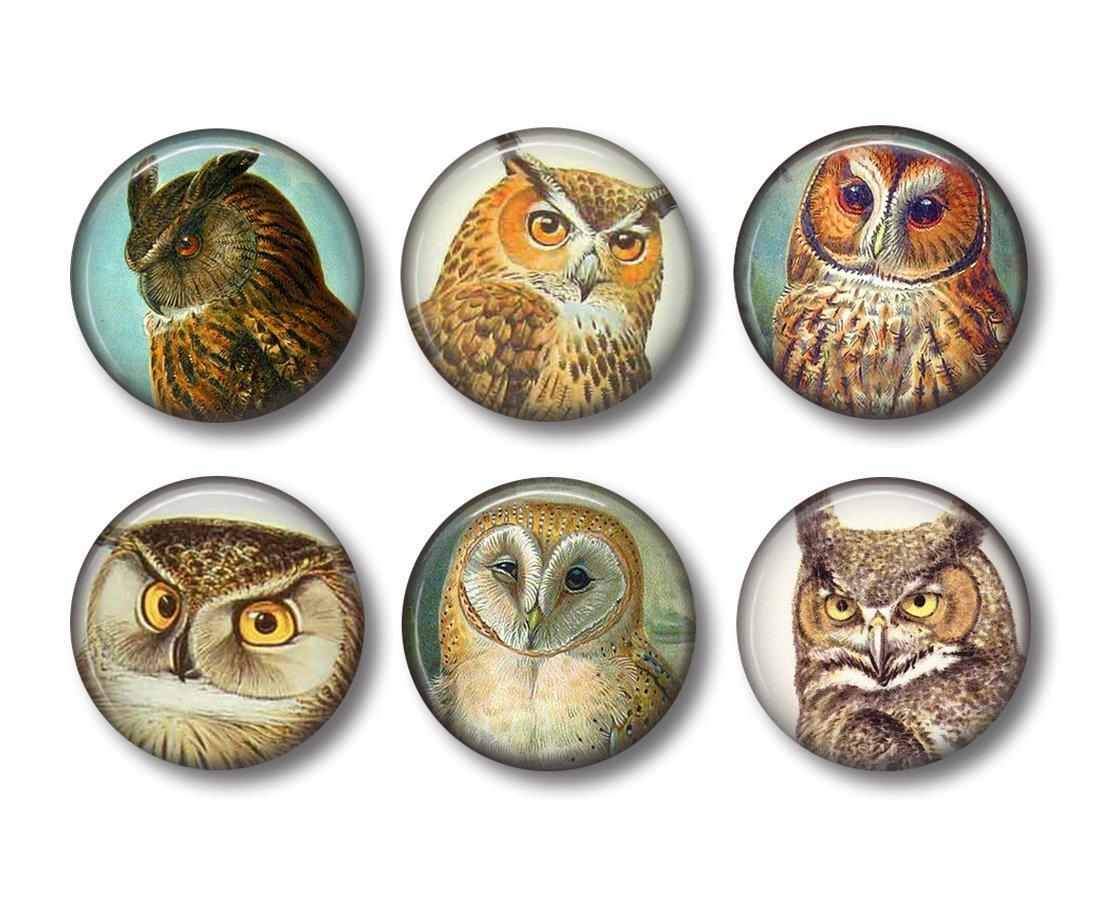 Owl Art - Fridge Magnets - Owl Magnets - 6 Magnets - 1.5 Inch Magnets - Kitchen Magnets