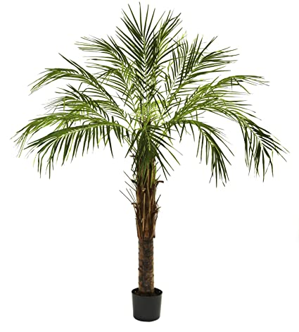 Amazoncom Artificial Tree 6 Foot Robellini Palm Tree Home Kitchen