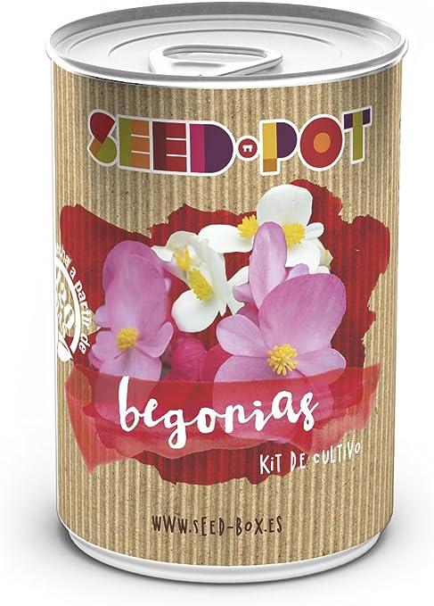 SeedBox PGPTFBE Lata de Cultivo begonias, 0.7x0.7x9 cm: Amazon.es ...