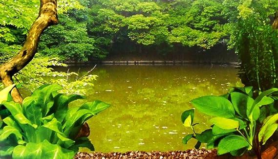 Acuario o terrario pequeño de plástico acrílico, para cría de gambas: Amazon.es: Productos para mascotas