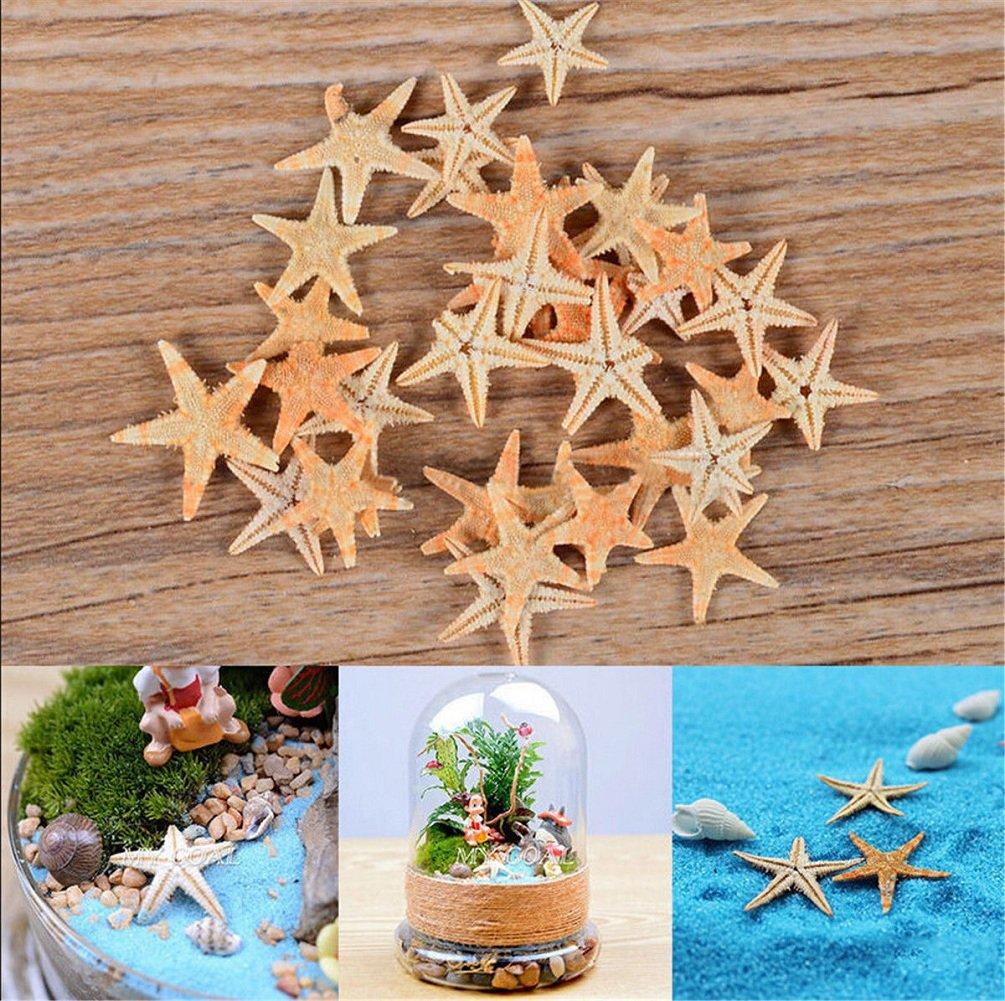Cheap4uk - Estrella de mar de estrella de mar pequeña y natural para paisaje, decoración para el hogar, acuario, pecera, decoración de playa, ...