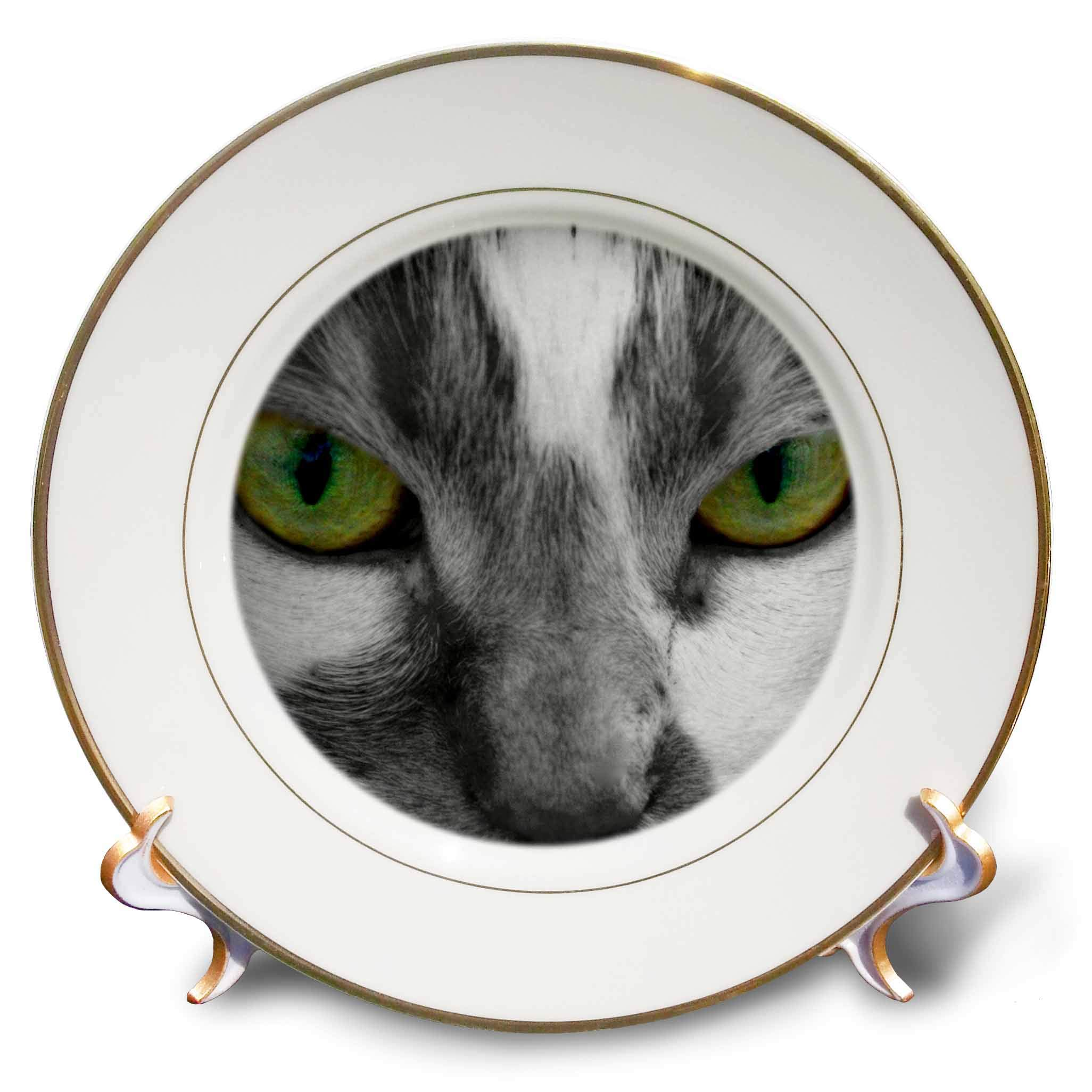 3dRose Stamp City - Animals - Close up Photograph of a Cats face. Black and White with Colored Eyes. - 8 inch Porcelain Plate (cp_293517_1)