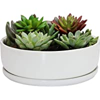 SQOWL 8 inch White Round Ceramic Succulent Planter Pot Modern Flower Cactus herb Big Planter with Removable Saucer…