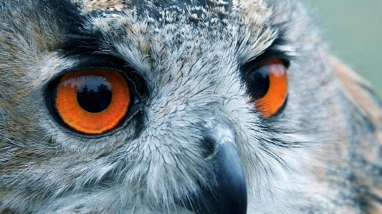 YINGXINXWM Pintura por Número De Kits para Principiante Decoración De Pared Regalos Pájaro Búho Ojos Reflexión Cabeza DIY Lienzo Pintura 40X50Cm(Sin Marco)