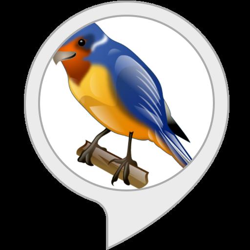 Relaxing audio: Bird Sounds
