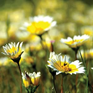 Pollinator Mix - California Wildflowers - 1 LB - Non-GMO, Open Pollinated - Annuals & Perennials - Mix of Wildflower & Flower Seeds Ideal for California