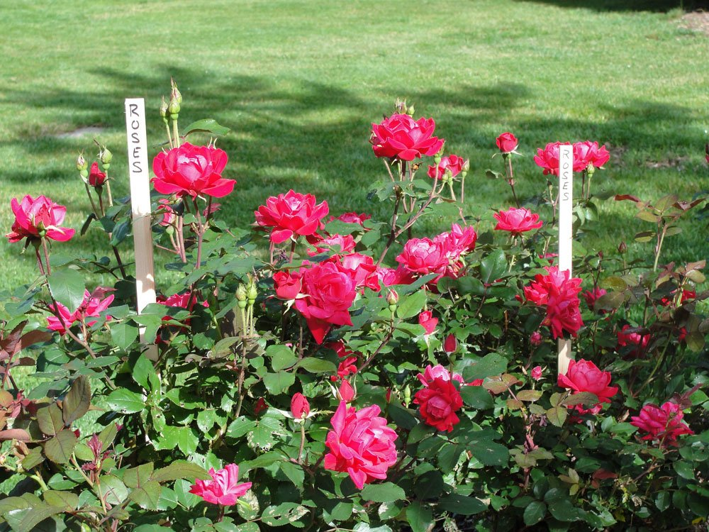 30 Pack 23'' Wood Stakes for Garden or Sign Posting by Garage Sale Pup (Image #3)