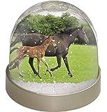 Advanta Mare mit Neugeborene Fohlen Schneekugel Snow Dome Geschenk, mehrfarbig, 9,2x 9,2x 8cm
