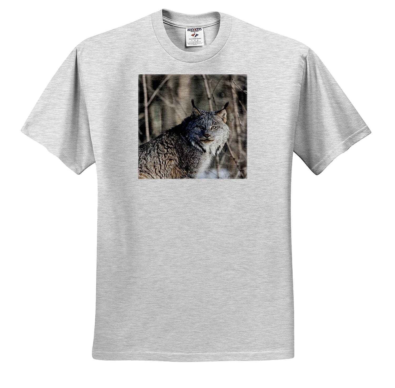 3dRose Danita Delimont Lynx in The Woods Adult T-Shirt XL ts/_314880 Sandstone Lynx Minnesota USA