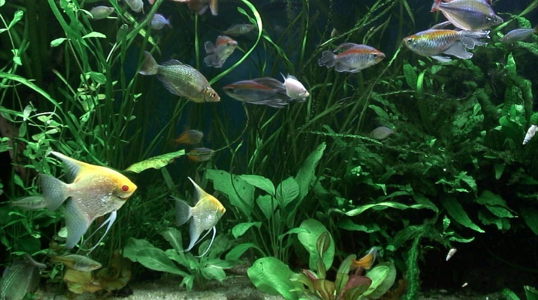 Fish for amazon aquarium - Amazon Com The Aquarium Dvd Fullscreen Edition Fish Aquarium Plasma Candy Movies Tv