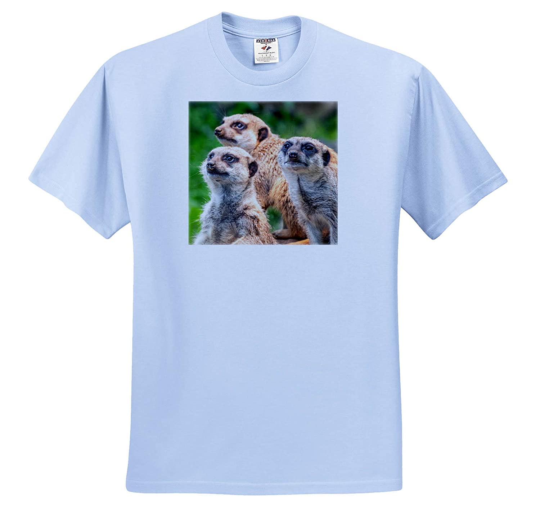 Adult T-Shirt XL ts/_317137 3dRose Sven Herkenrath Animal Funny Wildlife Meerkats Animal Zoo African
