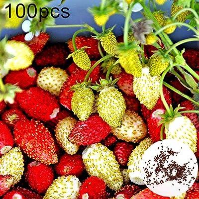 100Pcs Red Yellow Mixed Strawberry Seeds Bonsai Delicious Fruit Garden Plant : Garden & Outdoor