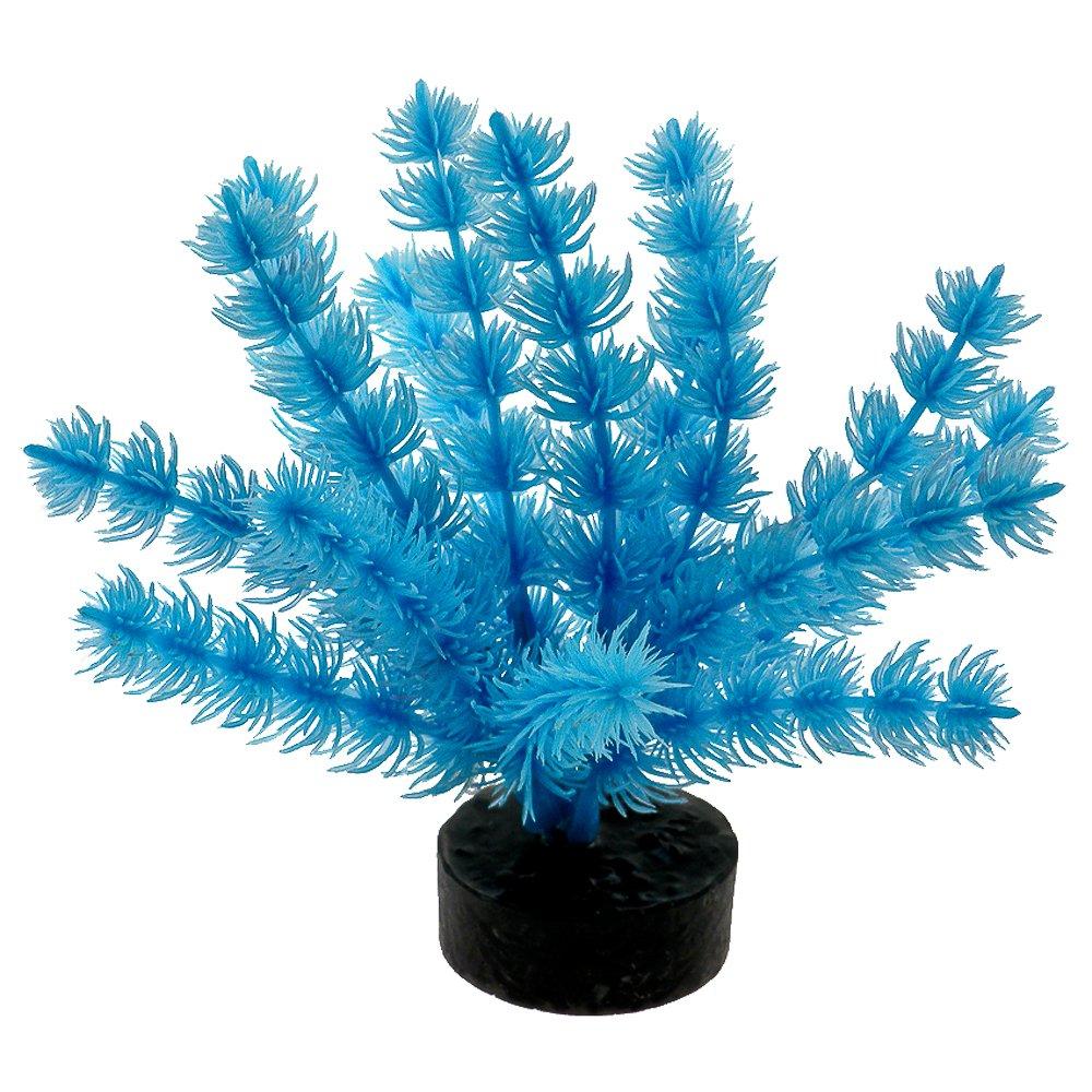 植物Fox Tail 30559 B00H839P5I  ネオンブルー