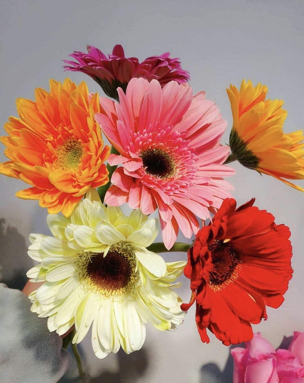 S-shine Assorted Color Mixed Four Colors Flower Pens Daisy Flower Ball Pen Ballpoint Pens Ball Point Writing Pen (1 Dozen (12pcs))
