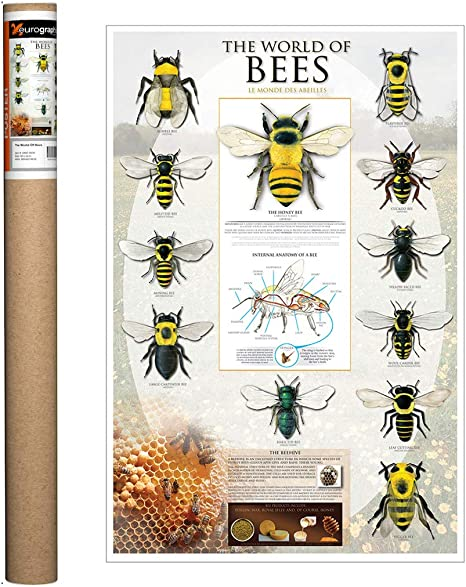 Poster Wall Art Home Decor Vintage Poster Enough Bee Poster Print 24x36 Inches