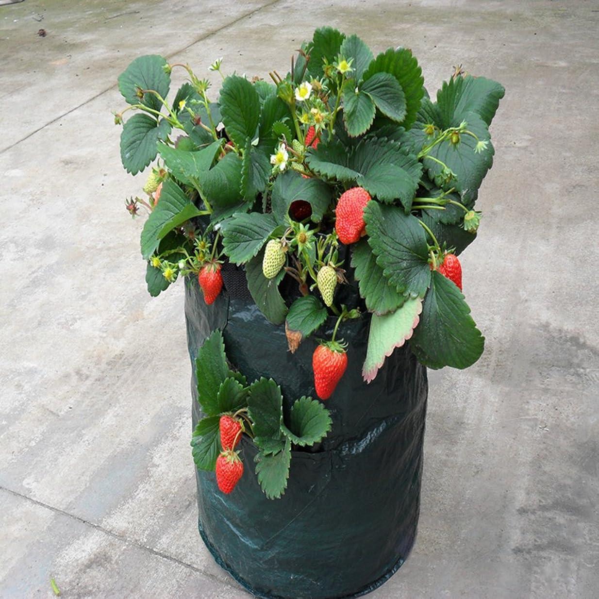 クローンヘビー見通し2個入り ハンギングバスケット 植物ボルダー ハンギングプランター 手作り ロープ ナチュラル プランターハンガー 植物ハンガーネット 鉢 吊るす 多肉植物 観葉植物 麻縄 インテリア 屋内 屋外