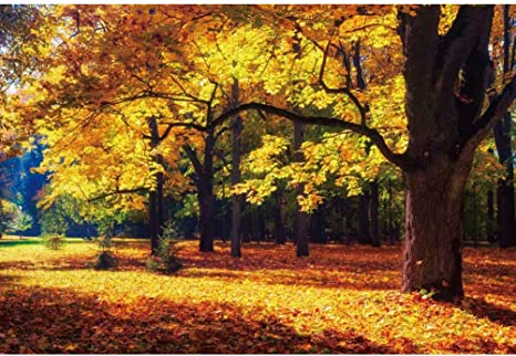 foto de Cassisy 2,2x1,5m Vinyle L'automne Toile de Fond Photo Paysage d ...