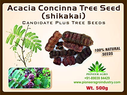 Acacia Concinna Shikakai Tree Seed 500g Amazonin Garden Outdoors
