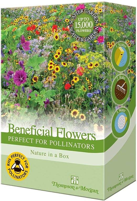 Surtido Jardín de Flores Planta Semilla Cultive Anual & Perennes ...