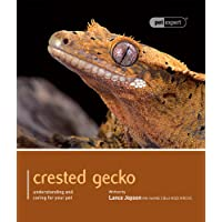 Crested Gecko - Pet Expert: Understanding and Caring for Your Pet