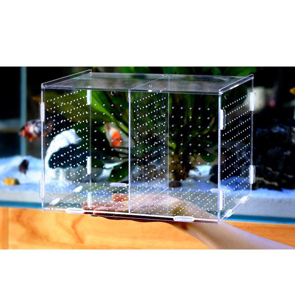 Baoblaze Caja de Aislamiento de Tanques de Peces Incubadora Acuario Caja Duradero - Enganchar: Amazon.es: Productos para mascotas