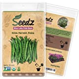 CERTIFIED ORGANIC SEEDS (Appr. 100) - Blue Lake Pole Bean - Bean Seeds, Open Pollinated - Non GMO, Non Hybrid Vegetable Seeds - USA