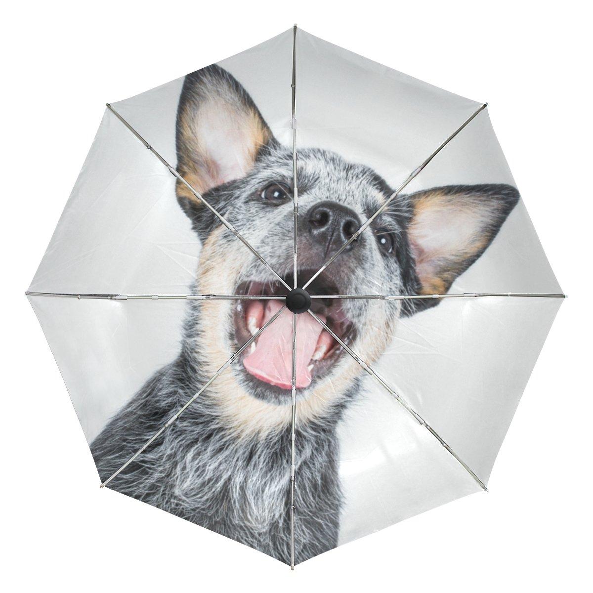 La Random Australian Cattle Dog Custom Windproof UV Proof Automatic Umbrella Foldable Compact Travel Umbrella chic