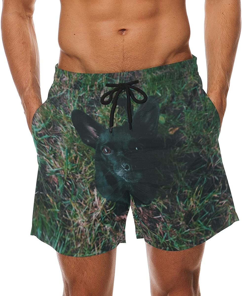 Black Puppy Mens Beach Shorts Swim Trunks Stripe Quick Dry Casual Polyester Swim Shorts