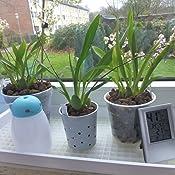 Fensterbankschale wei/ß Orchideen Untersatz Gitterschale