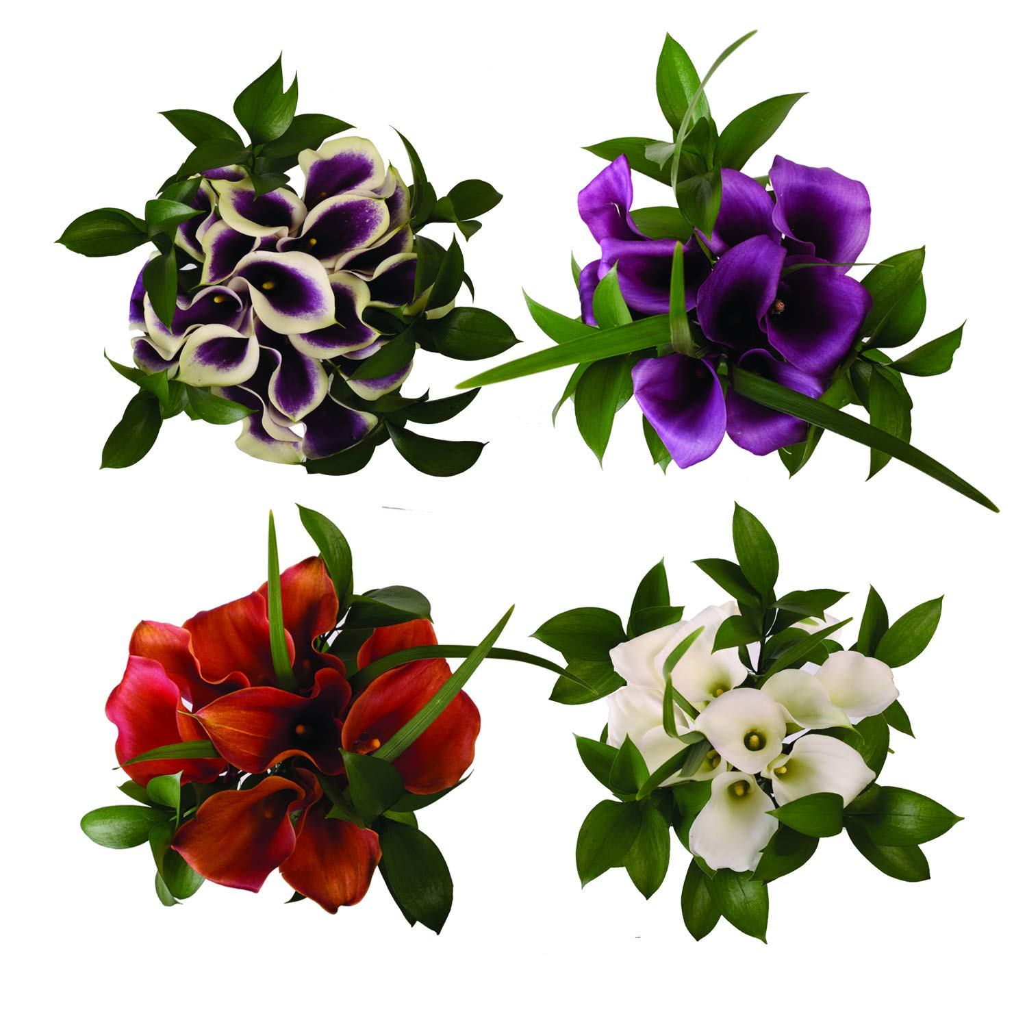 Mini Elegance Purple Passion Assortment - 8 Pack by Bloomingmore