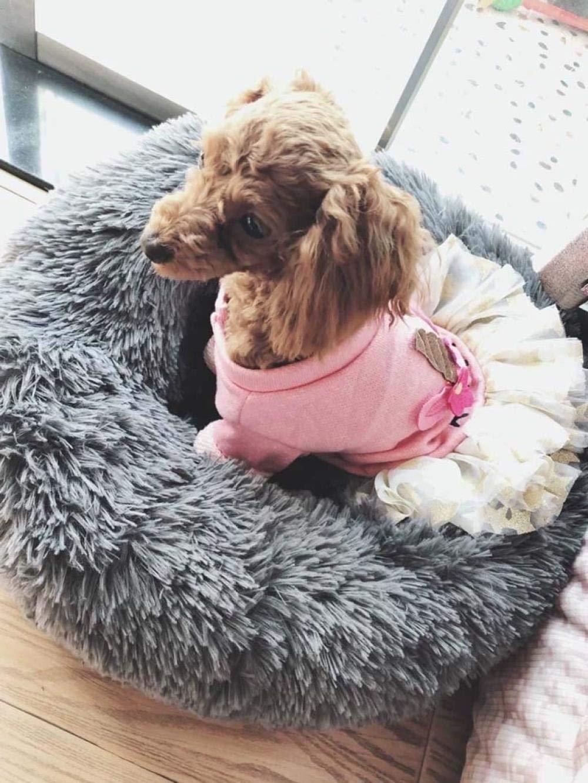 Suave y Lujosa Cama para Perro peque/ña juyuanjingguan coj/ín de Dona para Perros peque/ños y Gatos Que Duermen