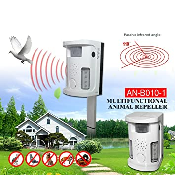 Repulsif pour animaux for Repulsif chat exterieur ultrason