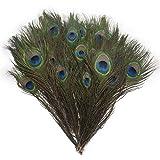 "Piokio 200 pcs Natural Peacock Feathers Bulk 10""-12"" for Holiday Crafting"