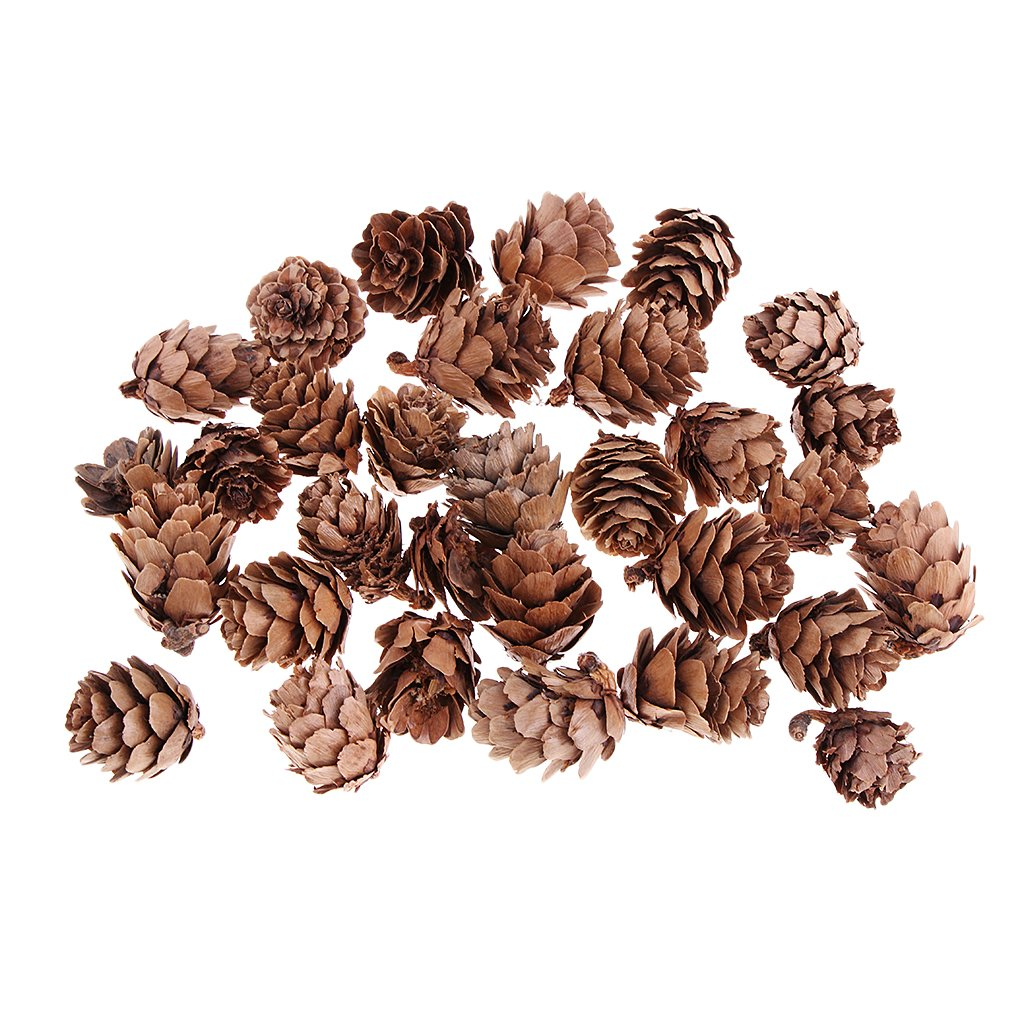Baoblaze 30 Pcs/lot Mini Decorative Pinecone Pine Cones Fall Winter Holiday Home Decoration Vase Bowl Filler Displays Crafts and Retro Photo Shooting Props
