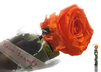 Prächtig Rosen-Te-Amo Geschenk für sie - ECHTE Blume - 3 JAHRE haltbar OHNE #SU_75