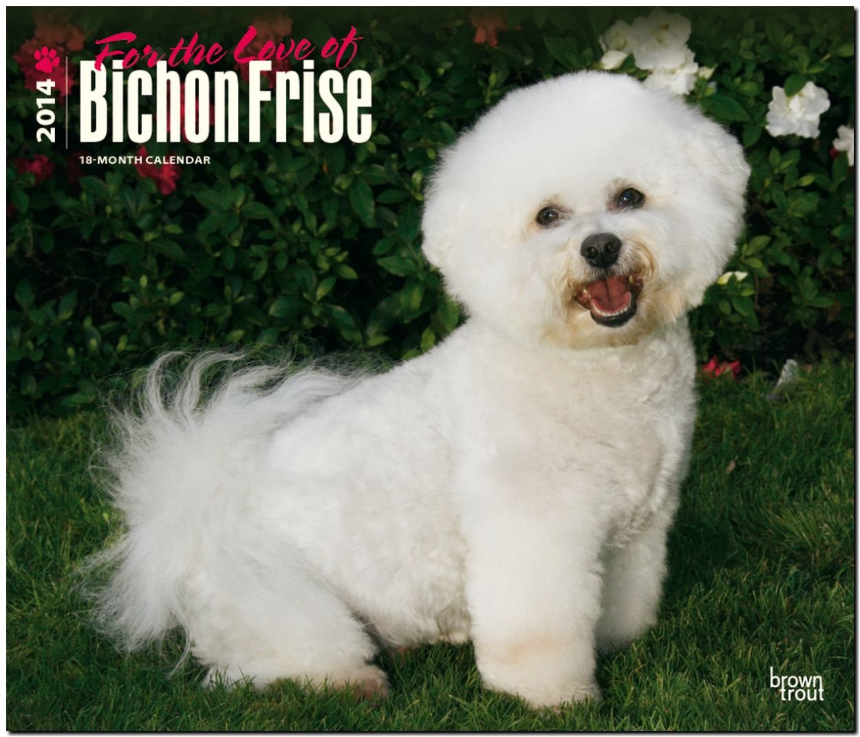 Bichon Frise - For the Love of 2014: Original BrownTrout-Kalender - Deluxe [Mehrsprachig] [Kalender]